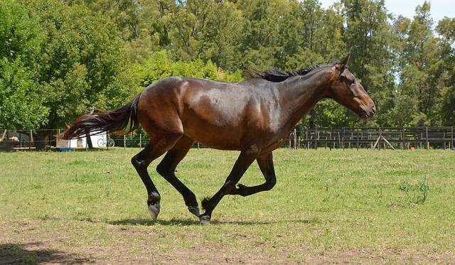 horse-2536543_640