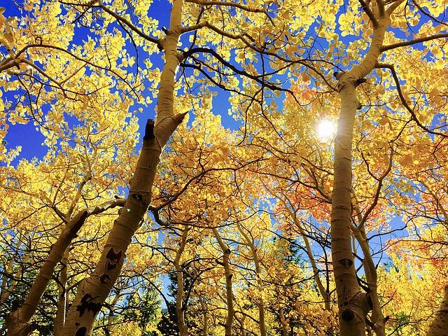 leaves-1363766_640