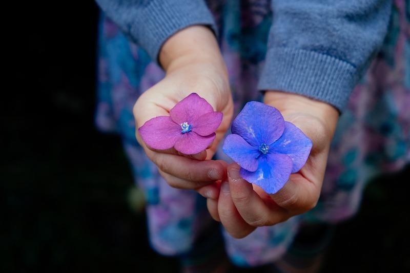flowers-945450_1280